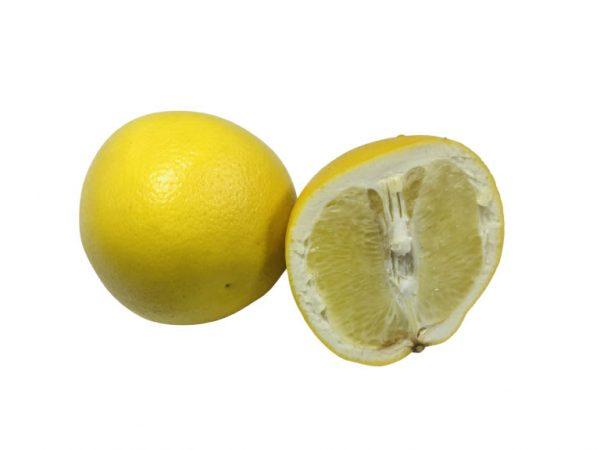 Yellow Grapefruit