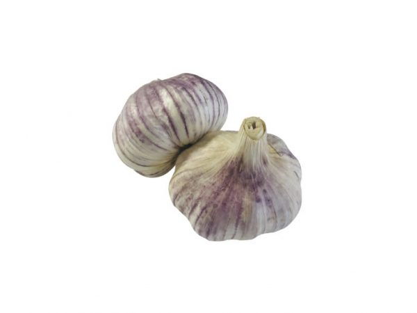 Violet Garlic Bulb